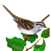 katsparrow