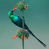 Fluorescent Bird