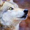 darkwolf131