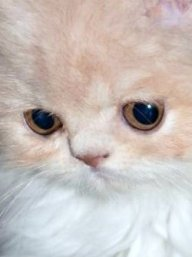 Augen Blick