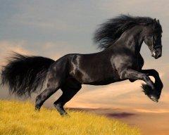 HorseCrazy