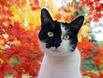 Autumn Hazel Rain