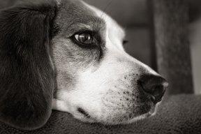 Hounddog905