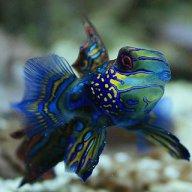 Zadocfish