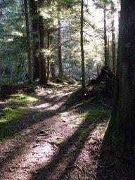 Forestwild