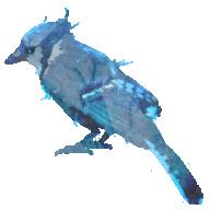jayebird