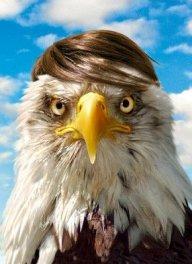 R.Eagle